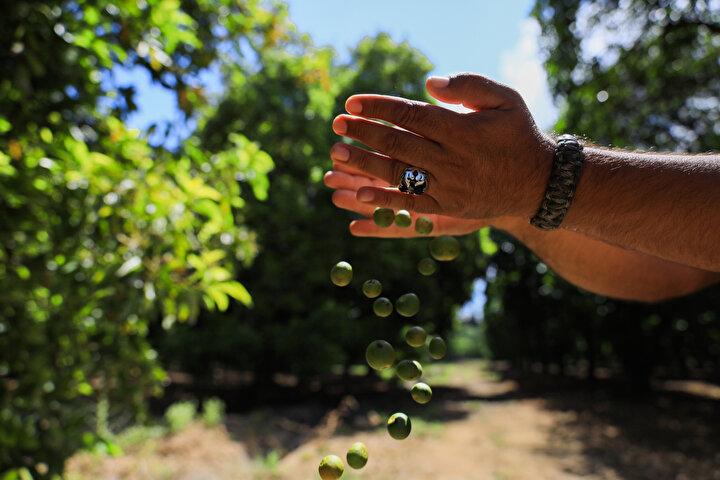 Türkiyedeki portakal üretiminin yüzde 30una denk gelen 508 bin 903 tonu Antalyada üretildi. Türkiyede 2019 yılında toplam 1 milyon 525 bin ton zeytin üretimi oldu. Bu üretimin ise yüzde 5ine denk gelen 70 bin 129 tonu Antalyada üretildi.