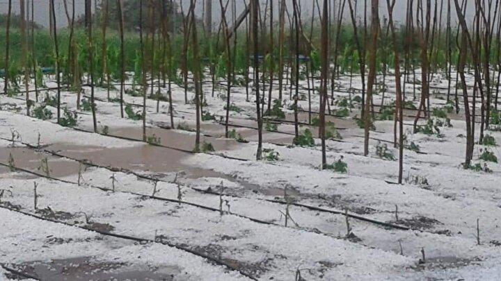Yağan dolu özellikle fasulye ve meyve bahçelerine zarar verdi.