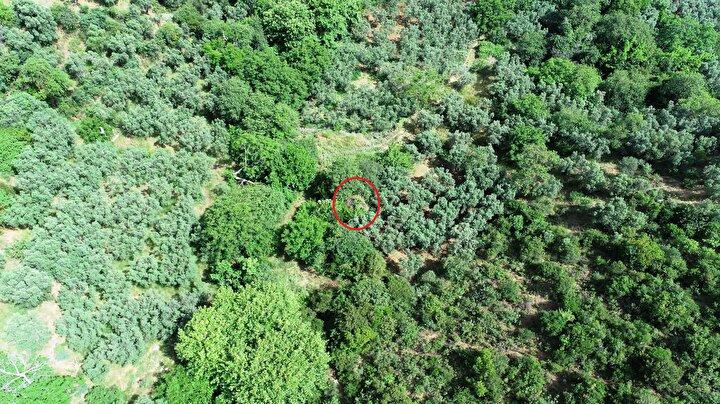 Bursanın Gemlik ilçesindeki Narlı köyünde, köyün kuruluşu ile birlikte 600 yıl önce inşa edilen Narlı Hamamı, zeytin ağaçlarının arasında kaldı.