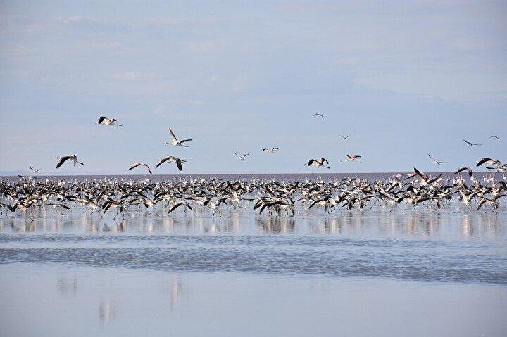 Ölü olarak bulunan flamingoların büyük çoğunluğu genç flamingolardan oluşuyor. Bazı ölmüş flamingoların gölde tuzla kaplanarak bembeyaz oluşu da dikkat çekti.