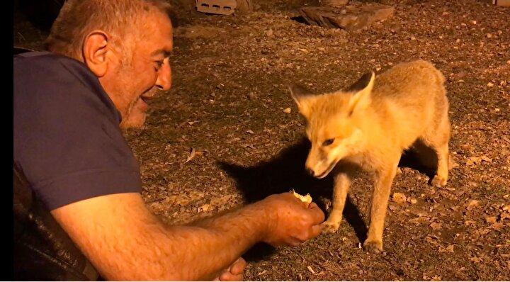 Aşar, evine borularla getirdiği suyla dönen çark sistemi sayesinde kendi elektriğini de üretiyor. Akraba ve arkadaşlarının ziyaret ettiği Aşar, evinin etrafına gelen tilkiyi de eliyle besliyor.