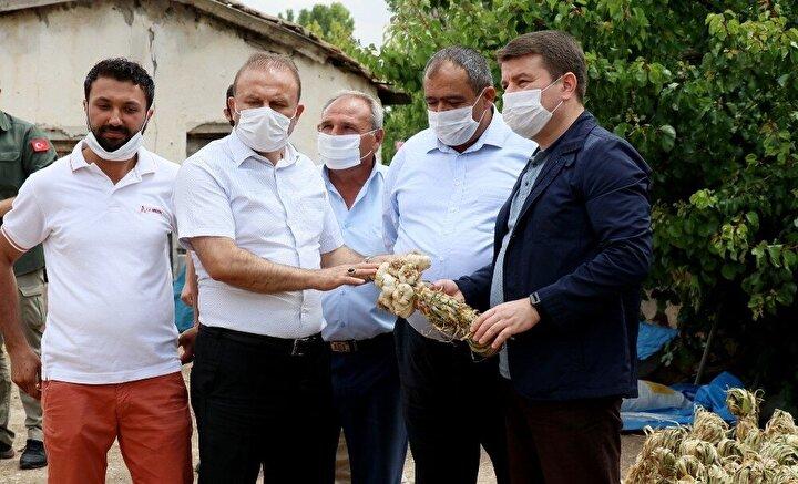 """Rusya'ya sarımsak ihracatının 3 yıl önce başladığını ve Türkiye'nin birçok ilinden numuneler alındığını belirten Öngün, açıklamasını şu şekilde sürdürdü:""""Aslında 3 yıl öncesinde bizim ihracatımız başladı ve Türkiye'nin belirli yerlerinden belirli sarımsak numuneleri alındı. Bizim Aksaray sarımsağının numune değerleri volkanik bölge olduğu için çok yüksek çıktı. Bunun içinde Rusya'da bir antibiyotik firmasıyla 2017 yılında anlaşıldı. İlk olarak Türkiye'den 2017 yılında Rusya'ya ilk sarımsak ihracatını gerçekleştirdik. Rusya bu sarımsakları antibiyotik firmasında kullanıyor. Bu yıl ki normalde Aydın Öngün'ün hedefi 150 ton ile 200 ton arasında. Şu anda kontratlar 200 ton üzerinde ama korona virüsten dolayı maalesef kota var ve bunu aşmaya çalışıyoruz. Onun dışında Dublin, İrlanda'da büyük bir teklifimiz var. Çek Cumhuriyeti ve Gürcistan. Ama öncelik olarak Rusya. Çünkü antibiyotik firması bizim için önemli bir firma."""""""