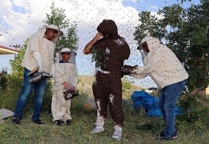 Bu sırada defalarca arılar tarafından vücudunun çeşitli yerlerinden sokulan Semo arılar üzerine toplandıkça konuşmakta hatta yürümekte bile güçlük çekti.