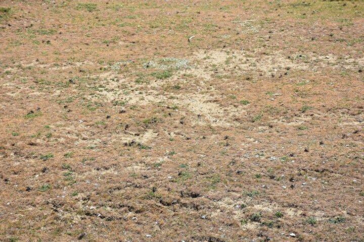 Sürünün ovaya inmesiyle ekili arazilerin zarar görmesinden korktuklarını söyleyen vatandaşlar, bir an önce önlem alınmasını istedi.