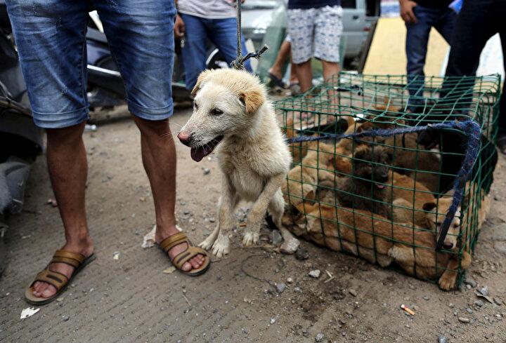 Hayvan hakları savunucusu Uluslararası Uygar Toplum (HSI) örgütünden Çin uzmanı Peter Li, köpek etinin yeni hastalıklara yol açabileceği ve sağlık riskleri oluşturabileceği konusunda uyardı.