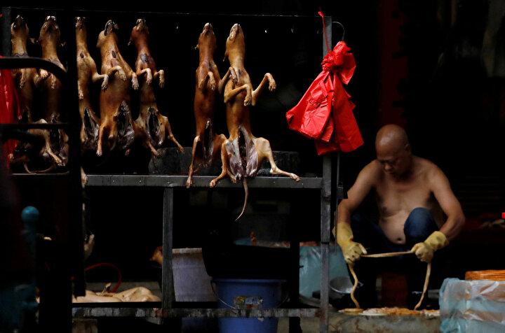 Yeni tip koronavirüsün (Kovid-19) ilk ortaya çıktığı Çinde 10 gün sürecek köpek eti festivali tepkilere rağmen başladı.