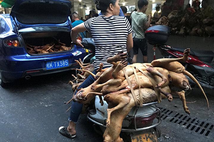 Çinin dört bir yanından tüccarlar et pazarında köpek ve kedi satmak için Yulin şehrine giderken Li, Çinin köpek eti ticaretini yasaklamak için yasal düzenlemeye ihtiyacı olduğunu kaydetti.