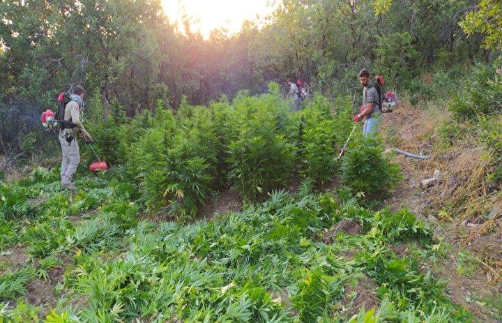Ele geçirilen kenevir bitkisinin son 4 yıl içerisinde ülke genelinde tek seferde yakalanan en büyük miktar olduğu öğrenildi.