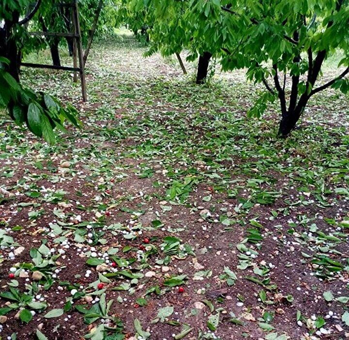 Yaklaşık 15 dakika etkili olan dolu yağışı ekili arazilere zarar verdi.