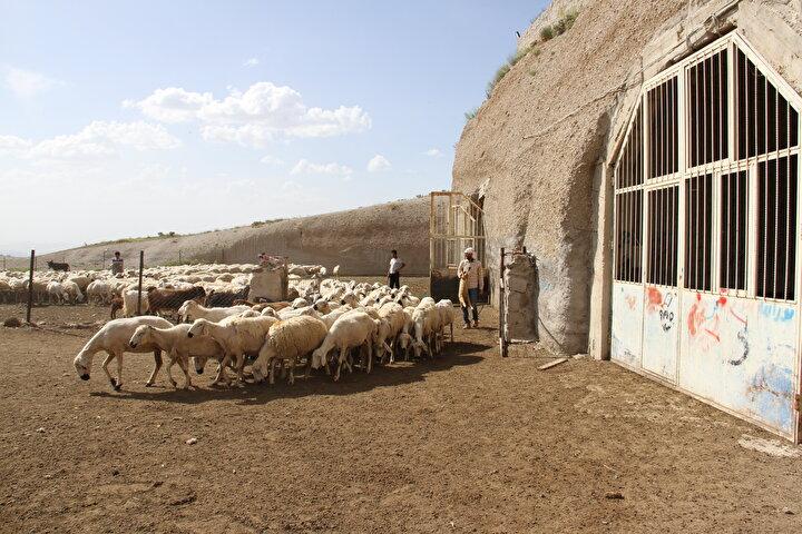 Hobi olarak 2004te 4 koyun alarak mesleğe ilk adımı attığını anlatan Çalıksoy, şunları kaydetti: