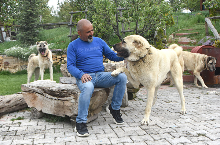 Kentte kendi çiftliğinde safkan köpekler yetiştiren Doğal Irk Kangal Köpeği Sevenler ve Koruyanlar Derneği Başkanı Orhan Yalçınkaya, hazırlanan projeyi memnuniyetle karşıladıklarını ve her türlü desteği vermeye hazır olduklarını söyledi. Yalçınkaya, Ben Sivas adına bu projeden çok memnunum.