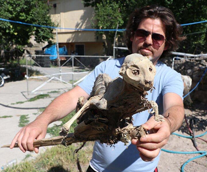 Bir süre şaşkınlık yaşayan Çeliker, iskeleti odun parçasından ayırmadan bodrumdan çıkarıp, Kayseri Müze Müdürlüğüne haber verdi.