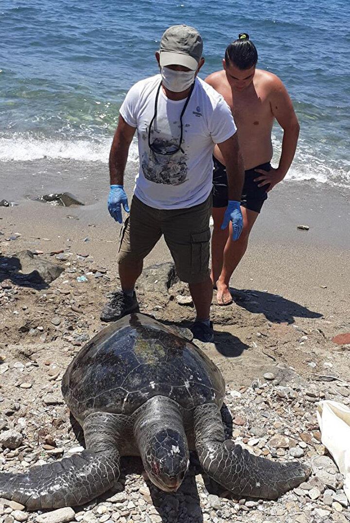 Dev kaplumbağanın balıkçıların ağına takılıp boğulduğu veya denize atılan plastiklerden dolayı öldüğü tahmin ediliyor.