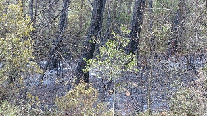 Yangın havadan ve karadan müdahale ile yaklaşık 2 buçuk saatte kontrol altına alındı.