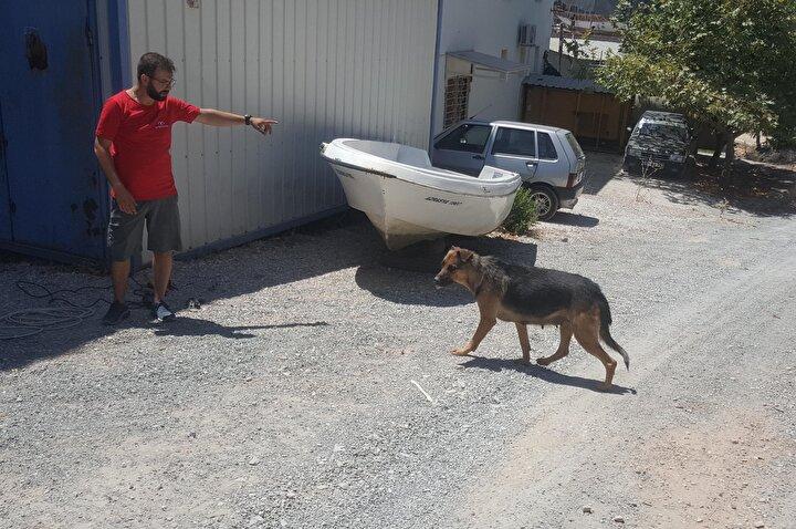 Köpeğin tersanenin önüne getirdiği ve insana ait olduğu belirlenen kafatasını gören işçiler, şaşkınlık yaşadı. Tersanenin işletmecisi 49 yaşındaki Ali Efe, sabah işe geldiğinde durumu öğrenip, polise bildirdi.