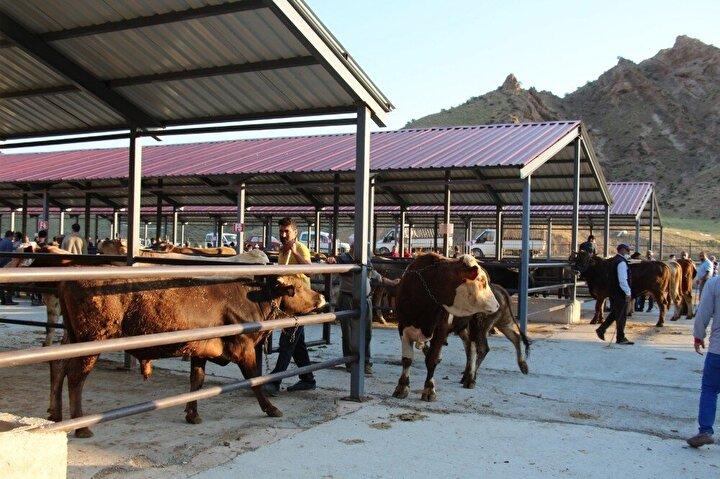 Sabahın erken saatlerinde kurbanlıklarını pazara getiren vatandaşlar, 1 yıla yakın süredir besledikleri hayvanlarını satmak için çaba sarf ediyorlar.