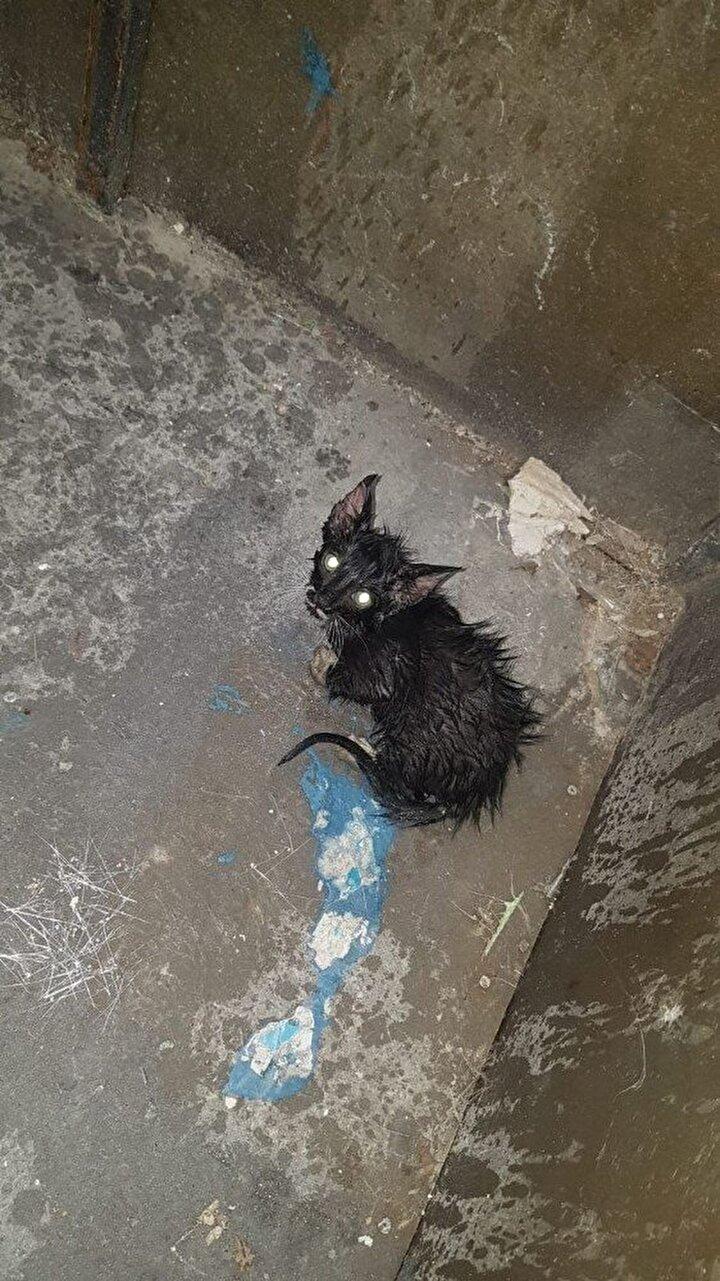 Kesilen borulardan çıkarılan yavru kediler, annelerinin yanına bırakıldı.