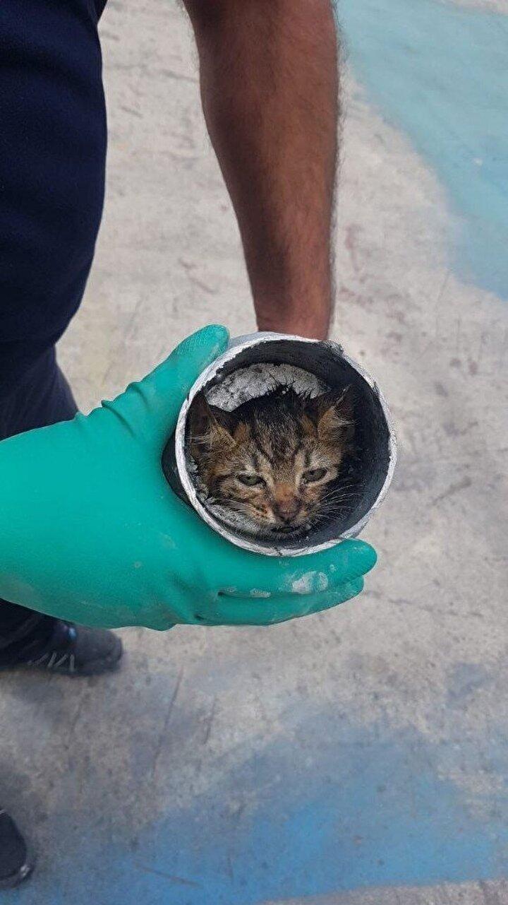 Fabrika işçilerinin de yardımıyla itfaiye ekipleri, kedileri bulunduğu boruyu keserek kurtarmaya çalıştı.