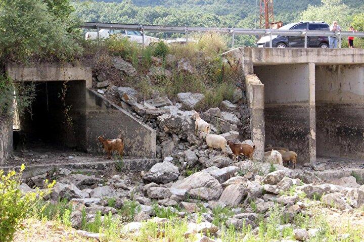 İstanbulun su ihtiyacını karşılayan Trakyadaki barajlar kurudu