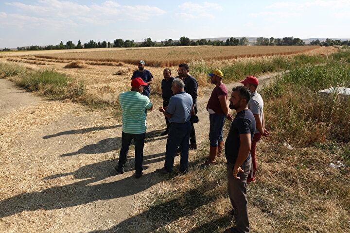 İki yıldır Türkiyenin farklı bölgelerinde üreticiler tarafından tercih edilen yerli tohum çeşidinin Çorumda ekildiği buğday tarlasından alınan verim, hem üreticileri hem de bitki ıslahçılarının yüzünü güldürdü.