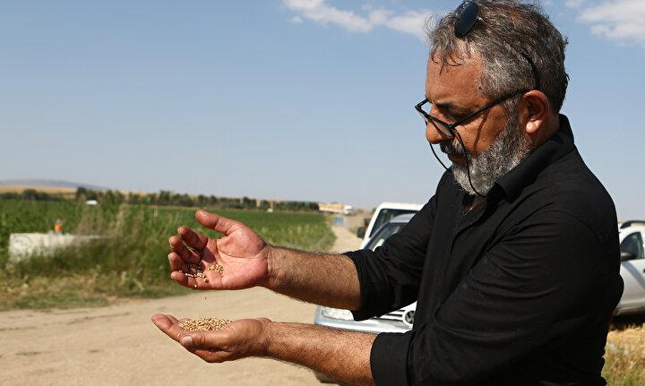 Merkezi İstanbulda bulunan bir firma tarafından anaç tohumları Trakya bölgesinde üretilen ve Türkiyenin 7 farklı bölgesinde geliştirilen Hüseyinbey tohumu, ülke şartlarına uygunluğu, yüksek verim kapasitesi ve yerlilik özelliğiyle çiftçiler için önemli bir alternatif oldu.