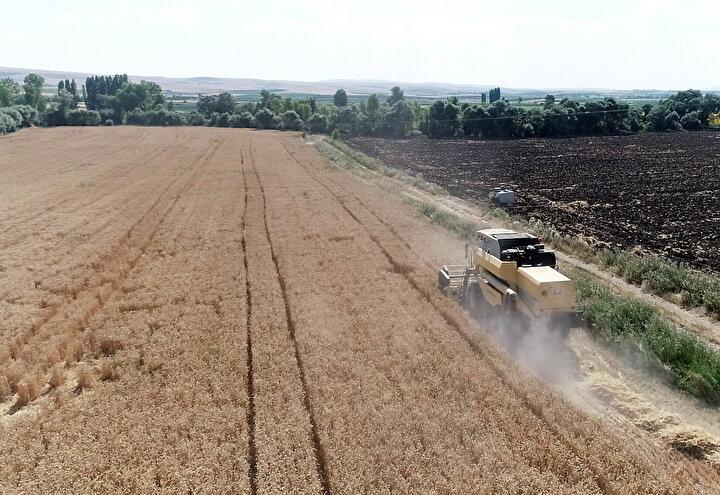 Alaca ilçesinde çiftçilik yapan Orhan Arslanın yaklaşık 40 dönümlük arazisine ektiği Hüseyinbey tohumundan biçerdöver ile gerçekleştirilen hasatta, dekar başına 1730 kilogram ürün alındı.