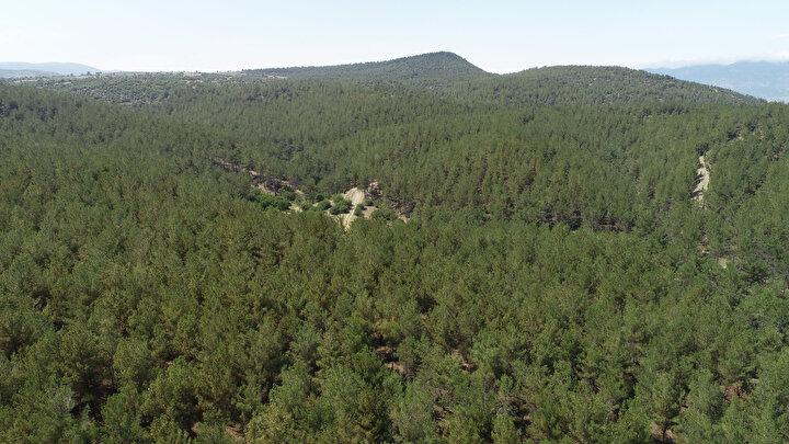 Sel heyelan riskini de ortadan kaldırıyor bu ağaçlar. Köylülerimiz bu alana gözü gibi bakıyor. Ağaçlarımızı koruyoruz. Kimsenin bu ormana zarar vermesine izin vermiyoruz. Devletimiz kadar biz de koruyoruz. Rahat bir nefes aldığımız bir bölge burası, yeşilinden ormanımızdan oksijenden hepimiz yaralanıyoruz. Bu ormanını oluşmasında emeği geçen herkese teşekkür ediyoruz diye konuştu.