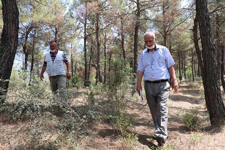 Ağaçlandırma çalışması başladığı yıllarda Akyörük Köyünde muhtar olan Hüseyin Deveci, ağaçlandırma çalışmasına bütün köylülerin destek verdiğini ve yardımcı olduğunu söyleyerek, Orman teşkilatımızın görevlileri 40 yıl önce buraya gelip çalışma yaptı.