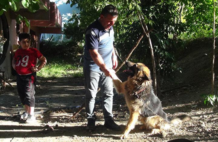 """Şahsın, köpeğimizi bıçakla yaraladığını gördük. Bu arada bir arbede yaşandı, saldırgan bize tehditler, küfürler yağdırmaya başladı. Olay sırasında köpek ortadan kayboldu, veterinere götürmek için aradık ama bulamadık. Jandarma geldi, köpeği bulduk, iki yerinden bıçaklanmıştı. Fakat hayati bir yara almamıştı. Jandarma saldırganı gözaltına aldı. Sabaha karşı bulduğumuzda ise kanlar içerisindeydi. Saldırganın ikinci kez bıçaklı saldırı gerçekleştirdiğini öğrendik."""""""