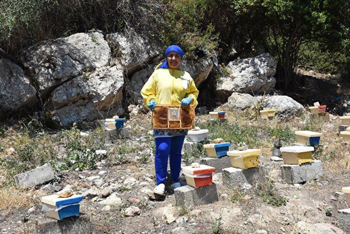 Ayrıca kraliçe arının en yaşlısı 2 yaşında olmalı. Kraliçe arıyı her yıl değiştirmek bir avantaj ancak en azından her iki yılda bir değiştirilmesi gerekiyor ki koloni daha güçlü olsun. Eğer verimlilik alamazsanız çaba ve eforu boş yere sarf edersiniz. Maddi anlamda bir kazancı olmaz dedi.