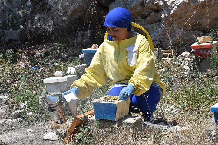 EGE ARISINA HER YERDEN TALEP VAR  Üretim sürecinin çok önemli ve hassas olduğunu vurgulayan Özşahin, Üretim gerçekten de çok teknik bilgiler barındırıyor ve bu yönüyle diğer hayvancılık işlerinden ayrılıyor. Kraliçe arı üretirken Karl Jenter seti ve elle larva transfer yöntemini kullanıyoruz. Özellikle setle üretim yaparken matematiksel hesaplamalar yaparak arıyı sürekli takip ediyoruz. Bu noktada her dakika bizim için çok büyük önem arz ediyor. Bu iki yöntemle damızlık Ege arısı üretimi yapıyoruz...