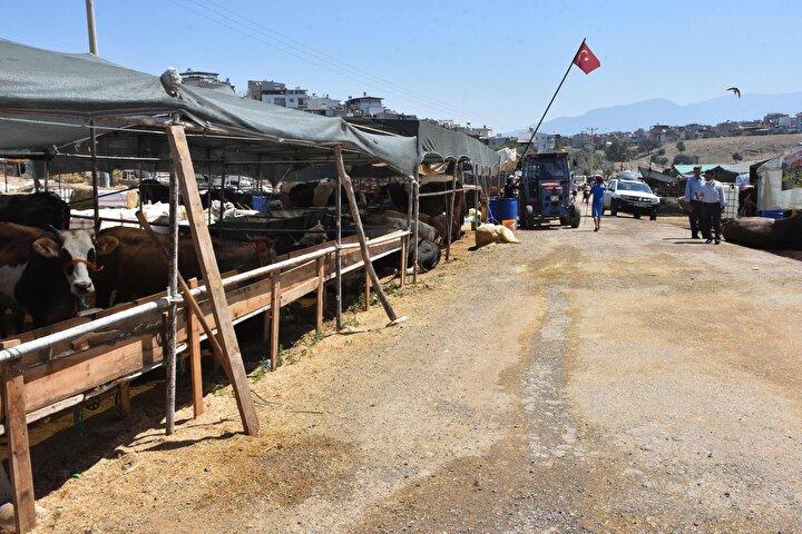 Kurban Bayramı nedeniyle Ardahan, Muş, Erzurum gibi doğu illerinden gelerek İzmirde küçükbaş ve büyükbaş hayvanları satışa sunan yetiştiriciler, oldukça sağlıksız bir ortamda günlerini geçirdiklerini belirterek gündelik ihtiyaçlarını karşılayabilmek için yetkililere seslendi. Lavabo ve tuvaletin olmadığı Aktepe kurban çadırında, haftalardır hayvanlarıyla burun buruna yaşayanlar, daha sağlıklı koşullara kavuşmak için belediyeye çağrı yaptı.