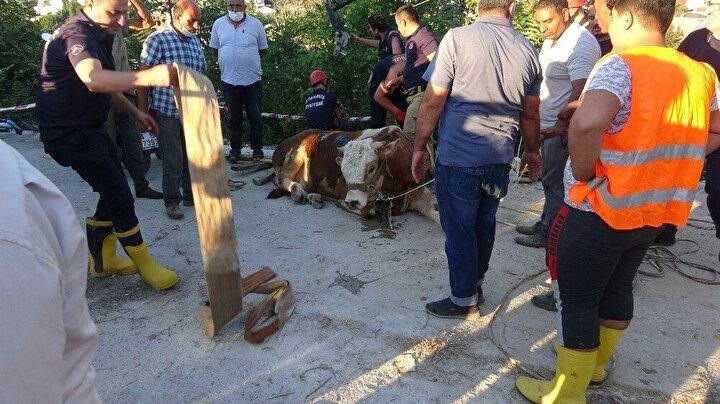 Üsküdarın Yavuztürk Mahallesi'nde 18.30 sıralarında hayvan pazarından kaçan bir boğa ekipleri harekete geçirdi.