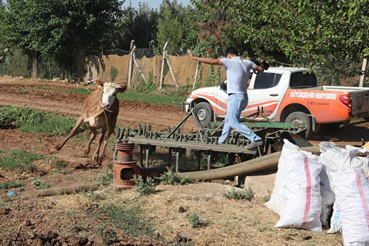 İpekyol Mahallesinde ise sahibinin elinden kaçan boğa, 20 dakikalık bir kovalamacanın ardından timlerin uyuşturucu iğne yapması sonucu sakinleştirildi, sahipleri tarafından bağlanan boğa kesim yerine götürüldü.