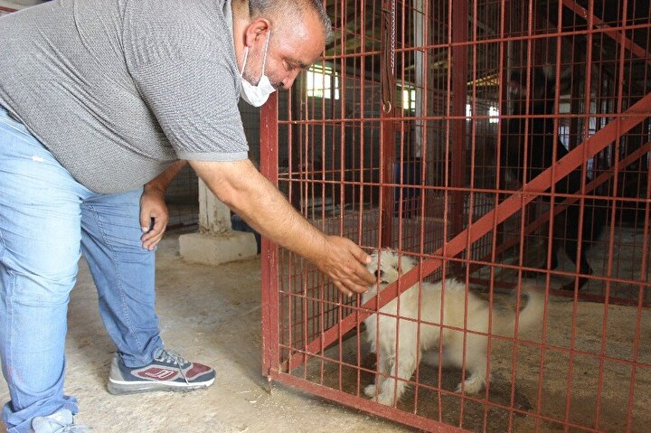 Ayrıca köpek oteli sahipleri her gün bir dakikalık video çekerek köpek sahiplerine hayvanlarının görüntüsünü gönderiyor.
