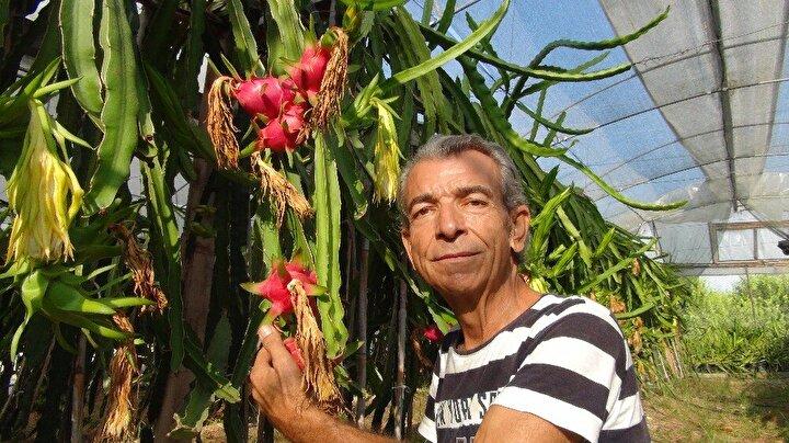 Meyvenin üretiminde gübreleme ve kimyasal mücadele yapmadığını belirten Eker, diğer örtü altı domates, biber, patlıcan gibi ürünlere göre üretim maliyetinin düşük, getirisi yüksek bir üretim olduğunu vurguladı.
