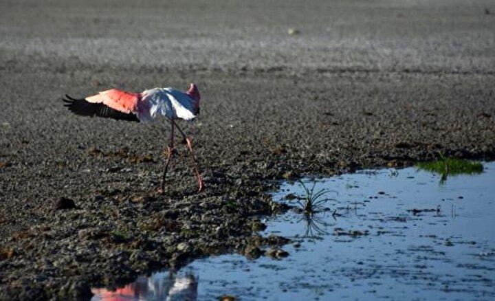 Beslendiği su kaynakların mevsimsel kuraklık nedeniyle kesilmesi üzerine Düden Gölü ve Küçük Göl tamamen kurudu. Göç mevsiminin başlamasıyla binlerce kuşa ev sahipliği yapması gereken gölü, su kuşları da terk etti.