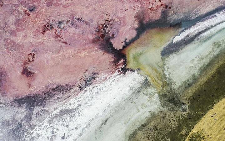 Ben burada doğmuşum. Göl bir insan boyu derinliğindeydi. Flamingolar ve çeşitli kuşlar vardı. Bu göl daha önce de iki kere kurumuştu. Şimdi de gördüğünüz gibi üçüncü kez kurudu. diye konuştu.