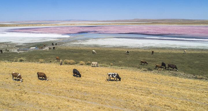 Su kuşları için üreme ve göç dönemlerinde uğrak yeri olan Düden Gölü, canlılığını koruduğu aylarda yaz ördeği, flamingo, Macar ördeği, dikkuyruk, kılıçgaga, büyük cılıbıt, Akdeniz martısı ve gülen sumru gibi 185 kuş türünü barındırıyor.