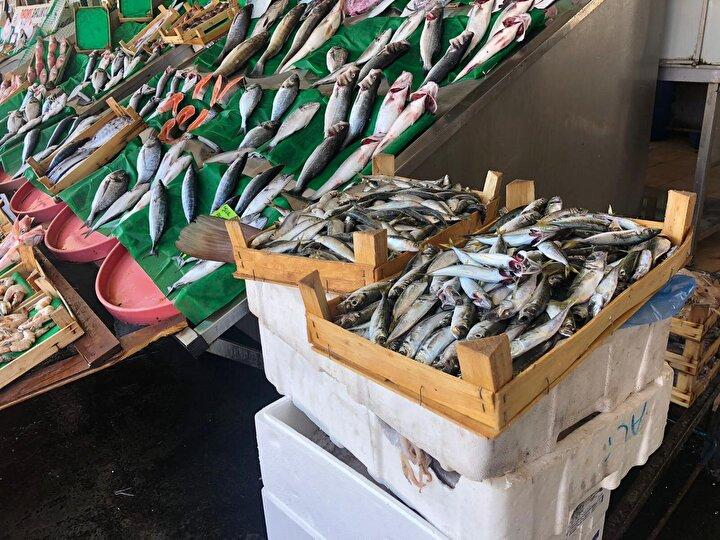 Denizlerde, 15 Nisan'da başlayan av yasağının dün gece itibariyle bitmesiyle birlikte tezgahlar dolmaya başladı. Tarihi Kumkapı Balıkçılar Çarşı'sında balıkçılar vira bismillah diyerek sezona başladı. Vatandaşlar da sezonun başlamasıyla birlikte taze balık alabilmek için balık çarşısına akın etti. En çok satılan balık ise palamut oldu.