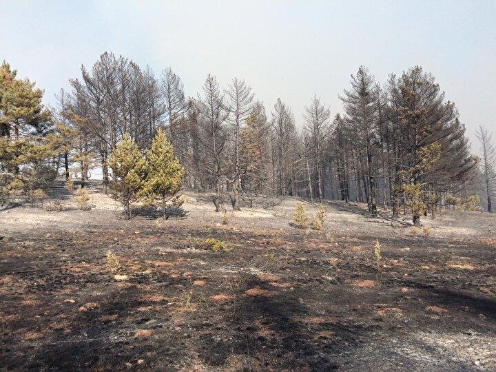 Derekaraağaç köyü Tekeoğlu Mahallesindeki 4 ev ile 4 samanlığın zarar gördüğü yangının başka köylere de sıçramaması için ekipler yoğun bir çalışma yürütüyor.