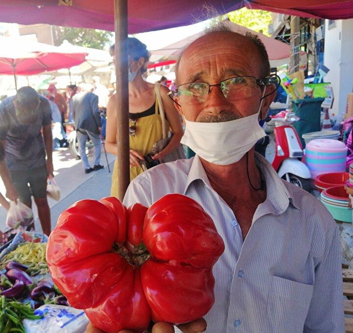 Tarlasından domates hasadına başlayan Çalışır, ürettiği domatesleri Ayvacık ilçe merkezindeki pazarda satışa sundu.