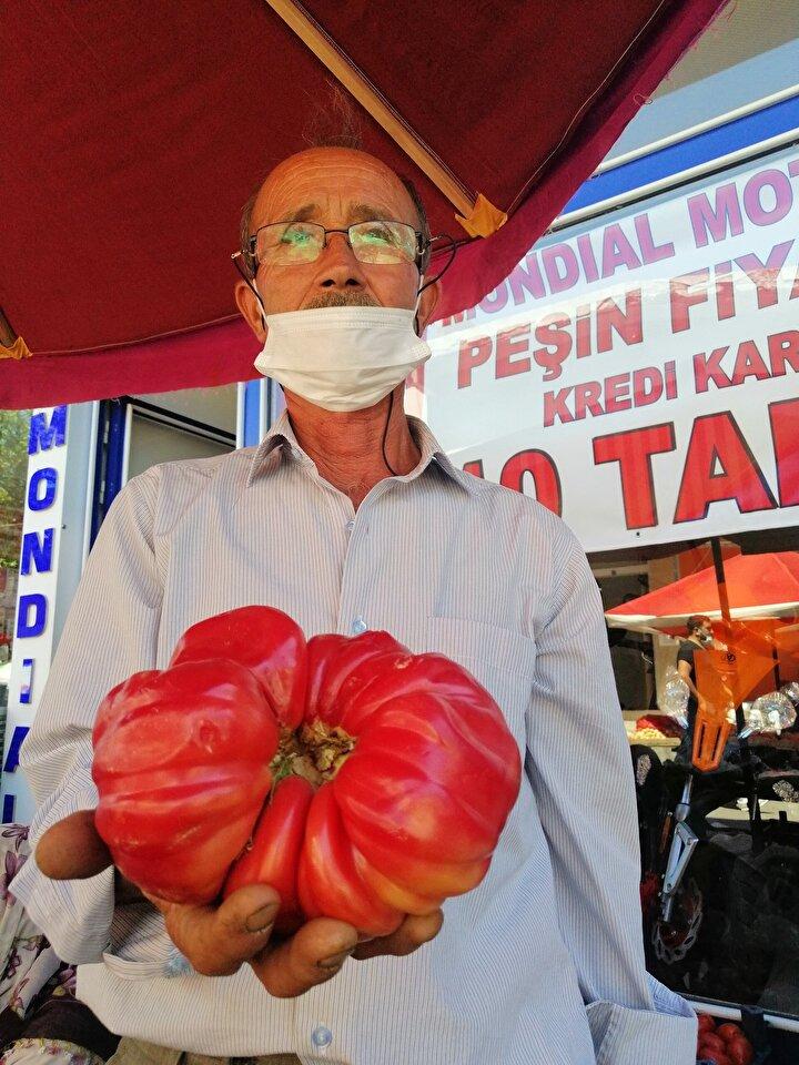 """Köyünde 30 yıldır sebze üreticiliği yaptığını ifade eden Nail Çalışır, """"30 yıldır çiftçilik yapıyorum. Böyle üretim ve verim hiç başıma gelmedi. 2 dönüm tarlama 7 traktör hayvan gübresi attım. Hayvan gübresi çok faydalı oldu ve domateslerimiz aşırı büyüdü. Bir domatesimiz de 1 kilo 120 gram geldi. Ürettiğim ürünleri Ayvacık Pazarında satışa çıkardım, kilosunu 2.5 liradan veriyoruz"""" dedi."""
