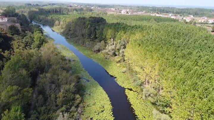 Karasu ve Kaynarca ilçelerinde yer alan ve 24 kilometrekarelik alanıyla dünyanın en büyük su basar ormanlarından biri olarak kabul edilen Acarlar Longozu, Tarım ve Orman Bakanlığı Doğa Koruma ve Milli Parklar 1inci Bölge Müdürlüğü bünyesindeki Sakarya Şube Müdürlüğünce gerçekleştirilen yapım ve bakım ihalesi kapsamında 450 gün boyunca ziyaretçiye kapatıldı.