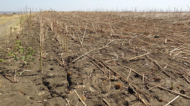 Kuraklık nedeniyle toprakta derin çatlıkların oluştuğu Edirnede üreteciler, yağmur yamaması halinde tarlasını ekime hazırlamama endişesini taşıyor.