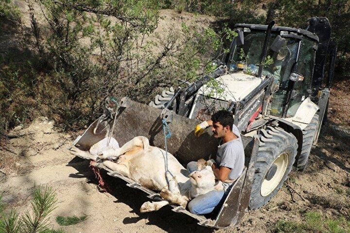 Olay yerine gelen Gergen, beraberinde Dağoğlu ve bir akrabası ile ineği çıkarmaya çalıştı. Yaralı ineği düştüğü yerden yaklaşık 300 metre götürebilen Gergen ve beraberindekiler, Karabük Afet ve Acil Durum Müdürlüğü (AFAD) ekiplerinden yardım istedi.