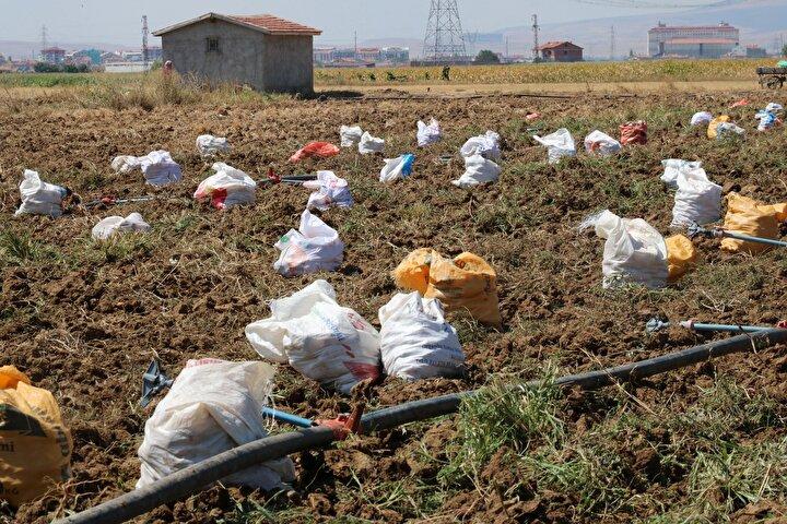 Türkiyenin önemli patates üretim merkezlerinden Afyonkarahisar ve ilçesi Sandıklıda patates üretimi sürüyor.
