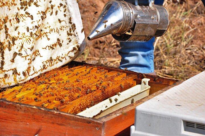 Almışlar, kovanlara yerleştirilen özel aparat sayesinde elektrik verilen arıların cama zehri bırakmasıyla elde ettiği arı zehrinin gramını yurt içine 400 TLye, yurt dışına ise 700 TLye satıyor. Cilt bakımı başta olmak üzere birçok hastalığının tedavisinde kullanılmaya başlanan arı zehri, özellikle Avrupa ülkeleri tarafından büyük ilgi görüyor.