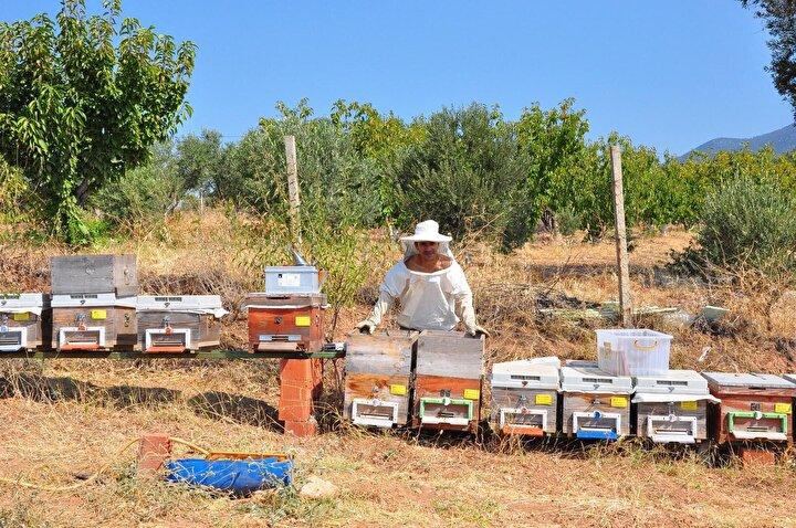 Kendi arımızla üretimin az olacağını bildiğimizden arı zehri aparat sayımızı yükselterek 500, 600 ve 800 kovanı olan arıcıların yanına giderek, onların kovanlarından arı zehri toplayarak bu şekilde üretim miktarımızı yükseltiyoruz. Bu şekilde yarım kilo civarında şu an üretim yaptık. Önümüzdeki yıllarda 1 kilo, 2 kilo gibi arı zehri toplama hedefim var.
