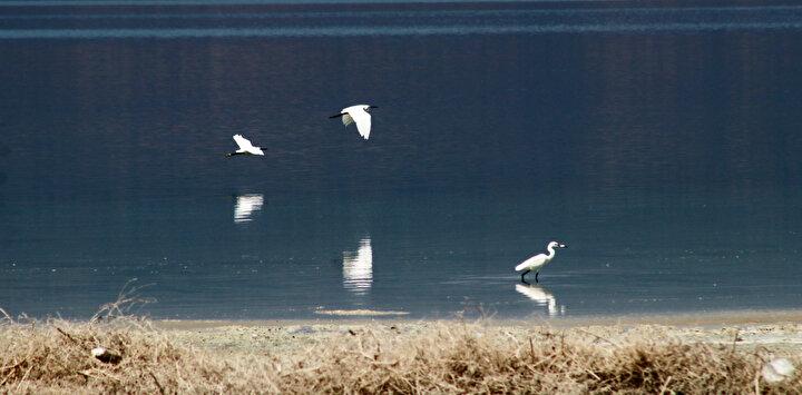 Burdur Gölündeki kuruma su kuşlarına sayısal olarak zarar verecek
